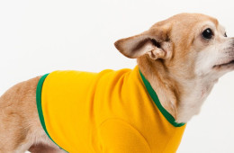 American Apparel Gold & Kelly Green Baby Rib Dog T
